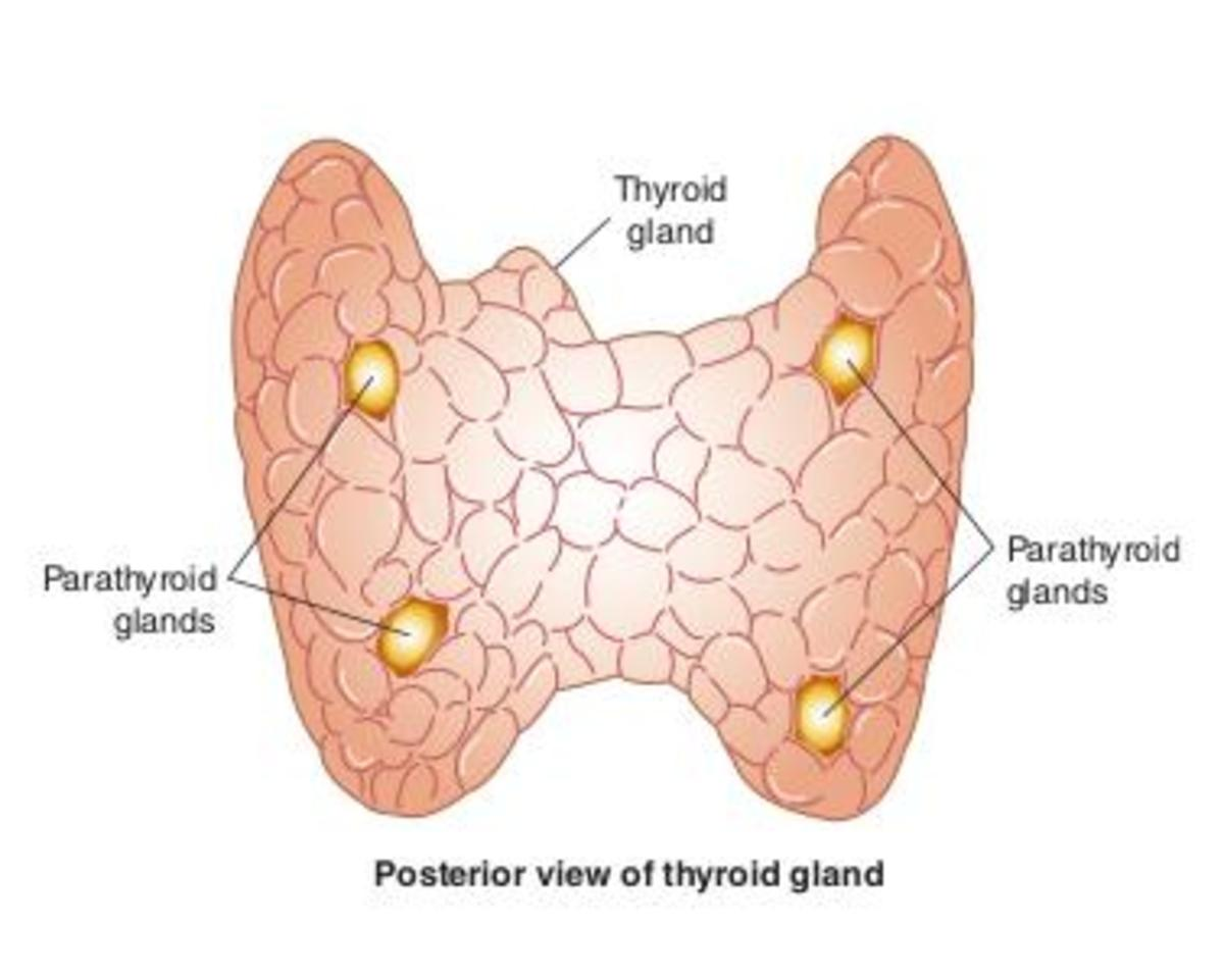 Is Low Thyroid Causing Your