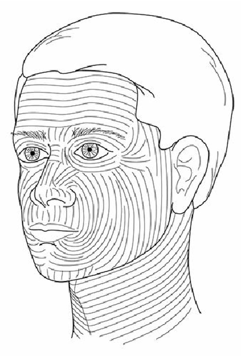 Langer's lines of the face